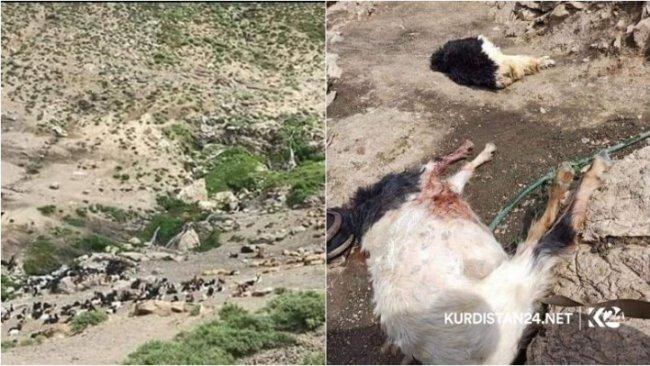 İran, Kürtlere ait hayvan sürüsünü hedef aldı