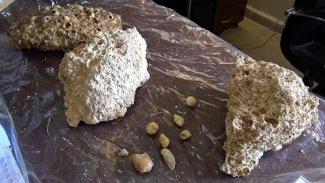 Kürt ilinde 50 milyon yıllık fosiller bulundu