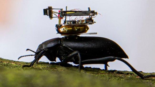 Böceklerin üzerine yerleştirilen, küçük kameralar geliştirildi