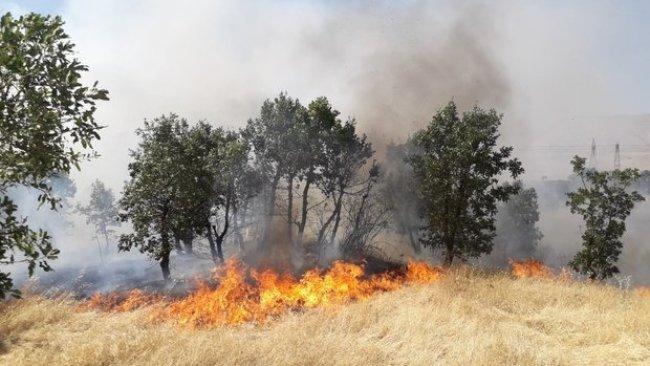 Diyarbakır'da yangın: 300 dönümlük alan küle döndü