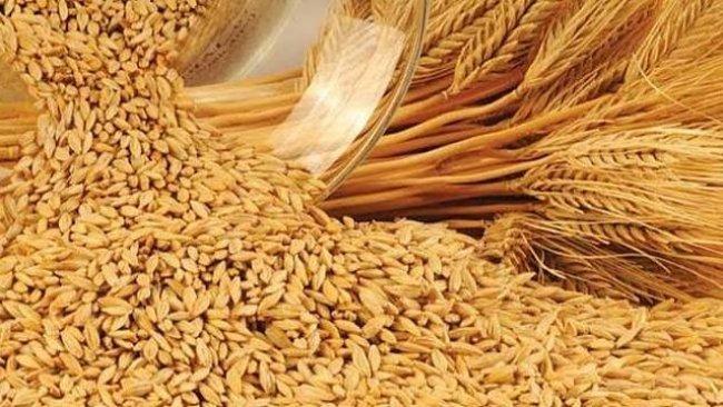 Kürdistan buğdayına birincilik ödülü