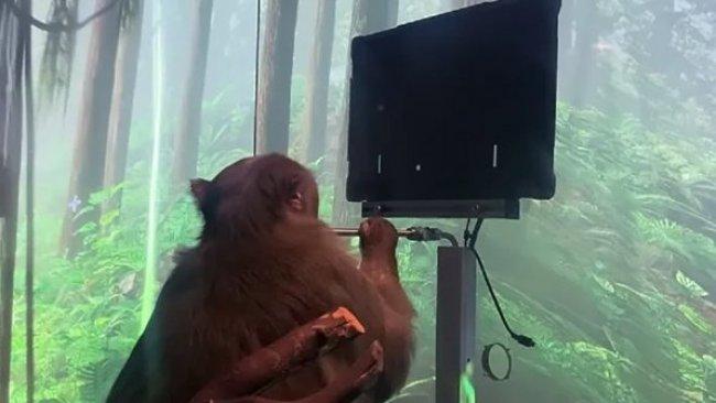 Elon Musk'ın beyin çipi maymun üzerinde denendi