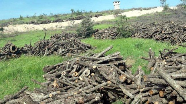 HDP'li Kaçmaz: Cudi dağında her gün 400 ton ağaç kesiliyor