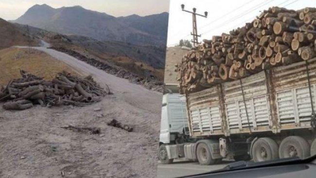 Türkiye'den 'Kürdistan Bölgesi'nde kesilen ağaçlar' açıklamalarına yanıt