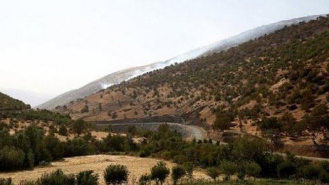 Fehim Taştekin: Doğa, PKK'ye karşı savaşa kurban ediliyor