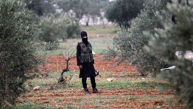 Silahlı gruplar 650 bin zeytin ağacı kesti